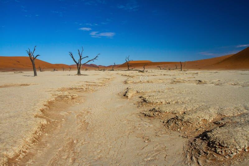 Dode Vlei dichtbij Sossusvlei in Nambia stock foto's
