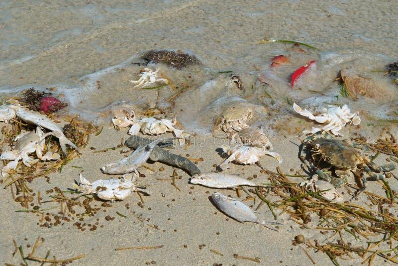 Dode zeevissen, krabben, gras stock afbeeldingen