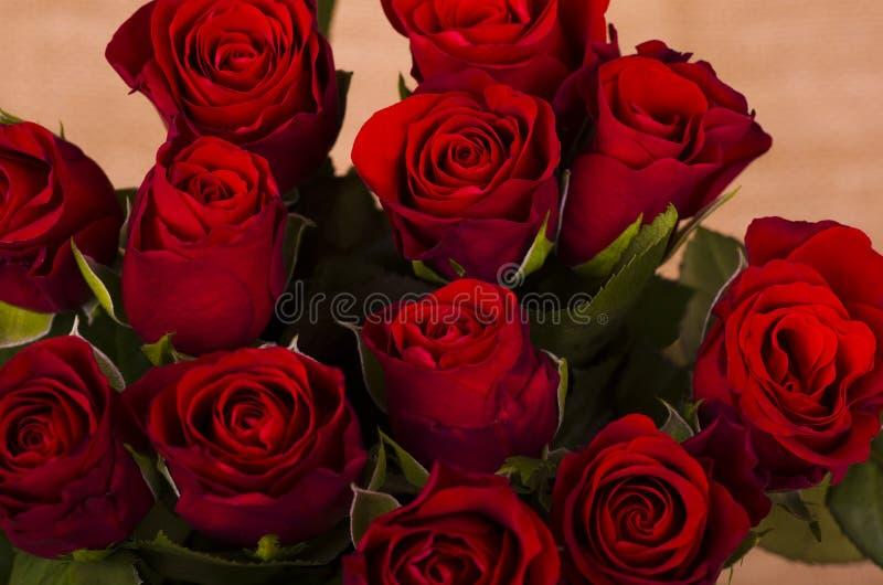 Dodici rosso Valentine Roses fotografia stock libera da diritti