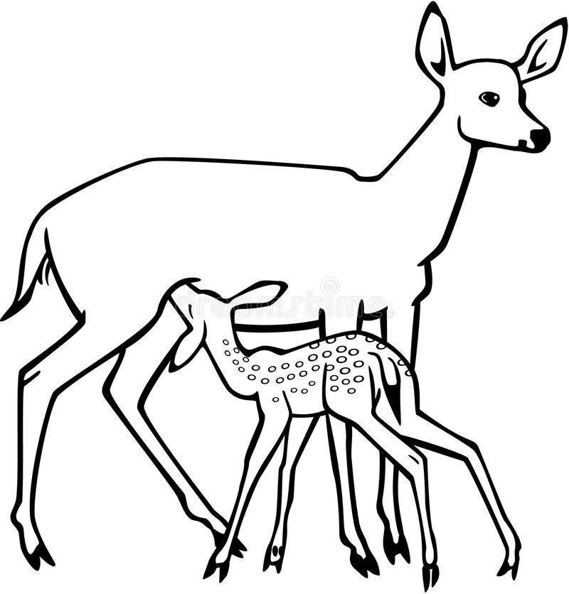Line Drawings Of Animals Deer : Doe and nursing fawn stock vector image of