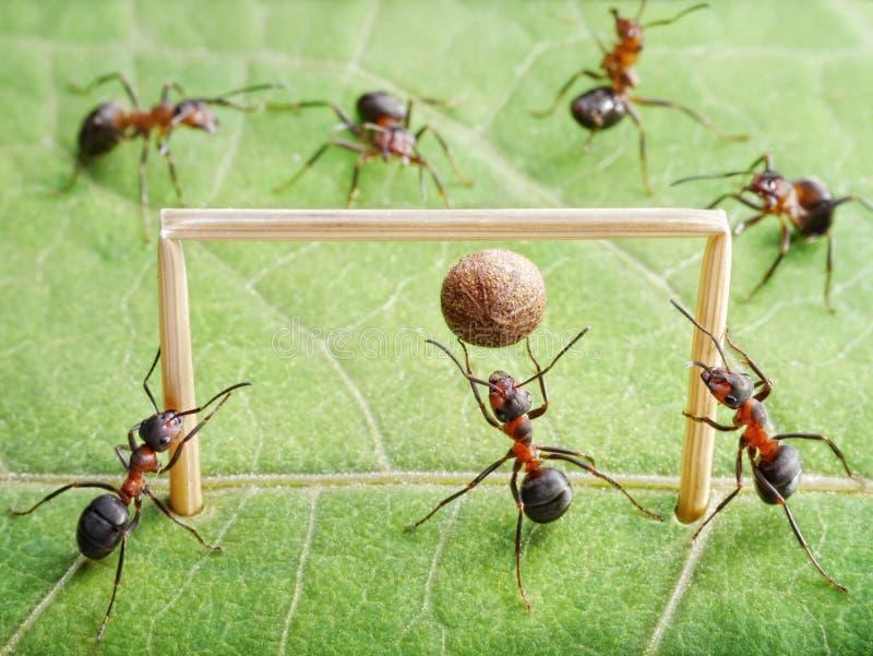 Doel, het voetbal van het mierenspel stock fotografie