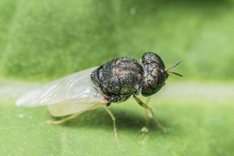 Doenças da causa das moscas fotografia de stock royalty free