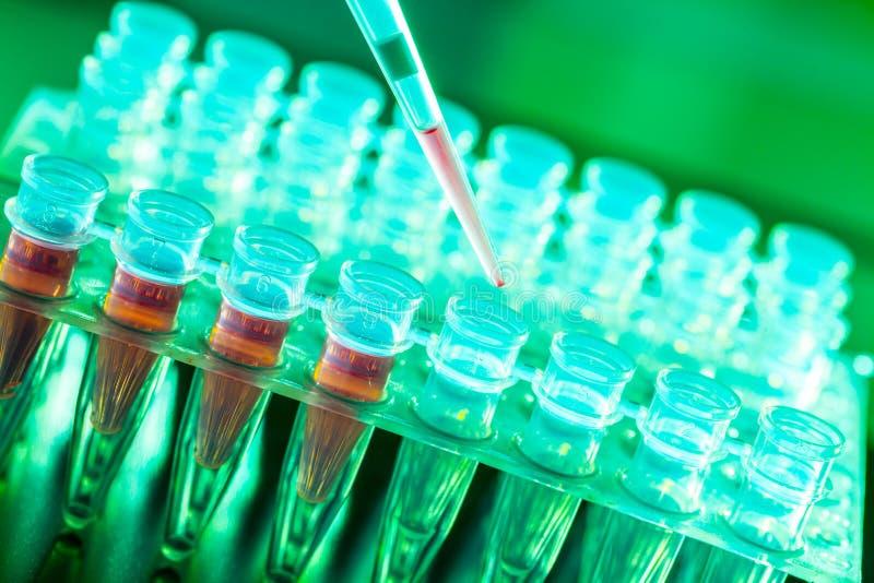 Doenças do câncer da pesquisa do laboratório, cremalheira com amostras do RNA fotos de stock