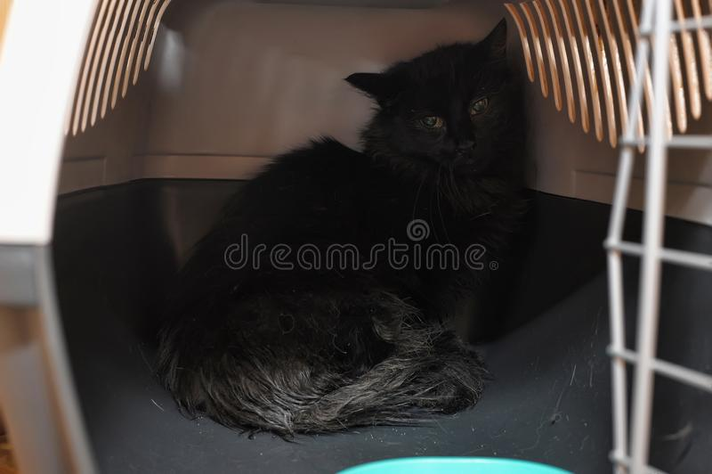 Doen schrikken zwarte kat royalty-vrije stock afbeeldingen