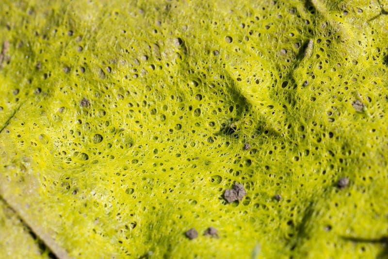 Doend walgen, walgelijk, slijmerig organisch groen mos, vorm, paddestoel ab royalty-vrije stock afbeelding