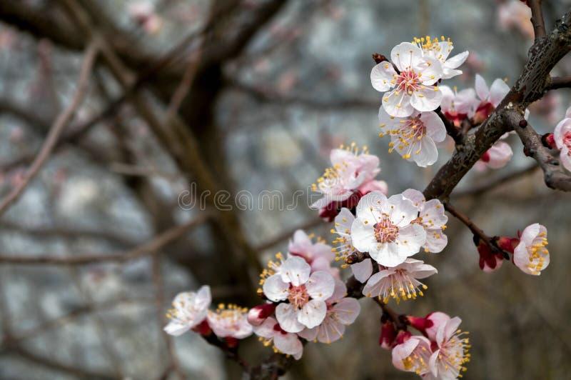 dof ανθών αζαλεών στενή ρηχή άνοιξη λουλουδιών επάνω στοκ φωτογραφίες