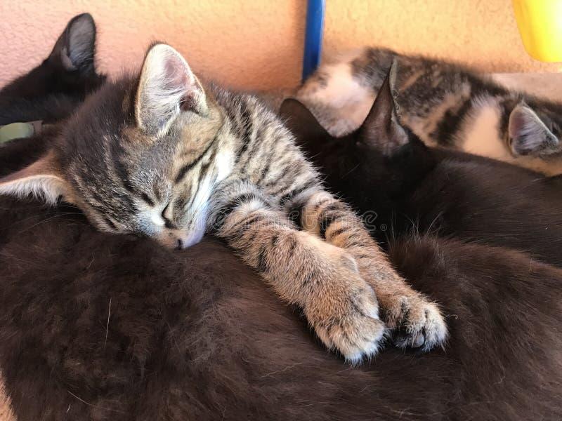 dof ομορφιάς σκυλιών εστίασης ρηχός ύπνος μύτης s εικόνας μακρο στοκ εικόνα με δικαίωμα ελεύθερης χρήσης
