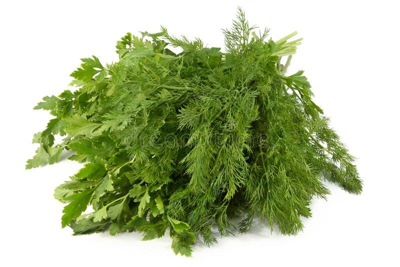 dofta saftig parsley för fennel royaltyfri fotografi