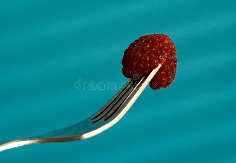 Doftande rött nytt hallon som är satt på en gaffel på en blå bakgrund arkivbilder