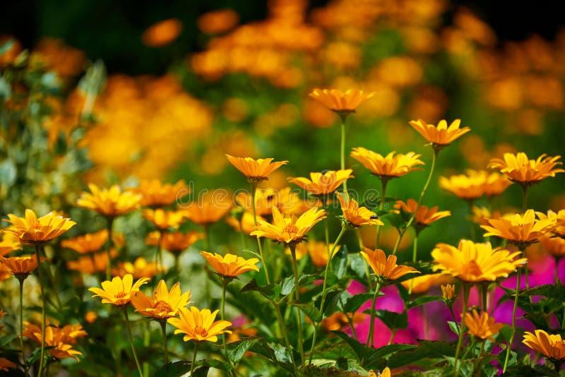 doftande solig blommablandning royaltyfria foton