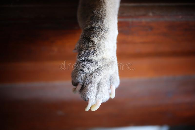 Dog& x27; ноги s кожные заболевания, черная кожа, волосы и ногти стоковая фотография rf