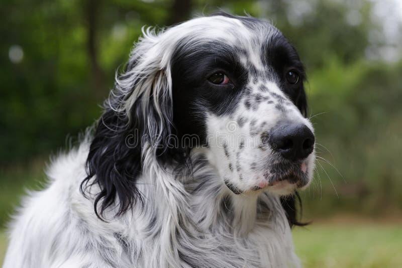 Download Dog 11 stock image. Image of animal, garden, feelings - 10602743