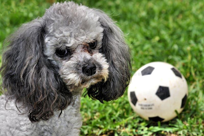 Doggie stock photography