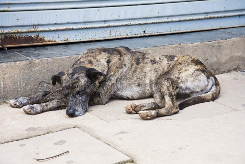 Download Dog stock photo. Image of mammal, doorway, peaceful, creature - 1124240