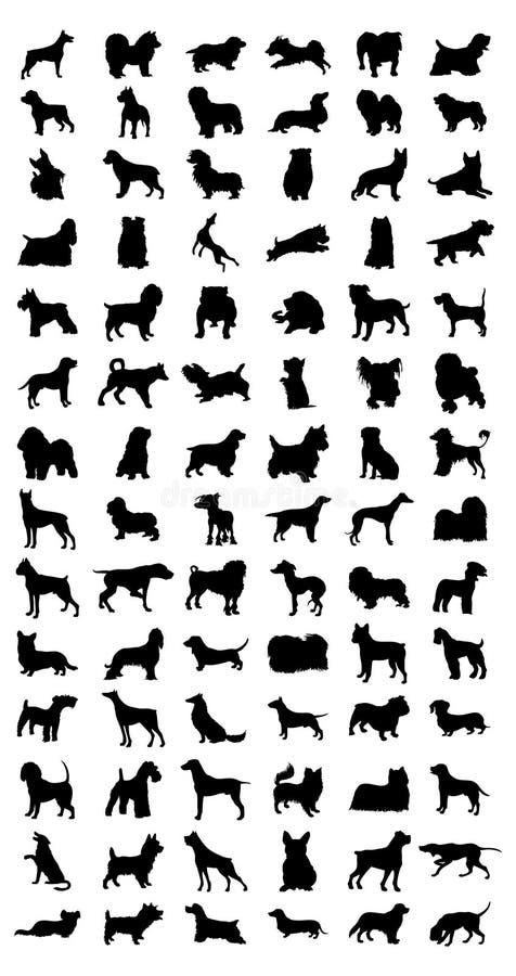 Free Dog Stock Photos - 12912993