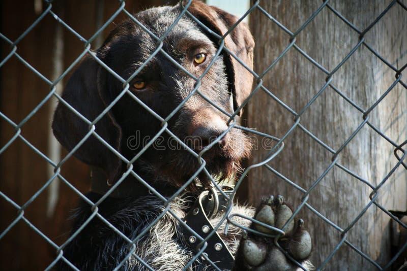 Download Dog stock photo. Image of labrador, doggy, gundog, friend - 13929308