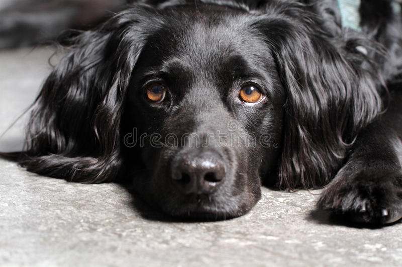 Dog. Sweet gorgeous beautiful black