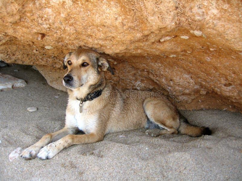 Download Dog stock image. Image of rock, teeth, animal, gazing, position - 181381