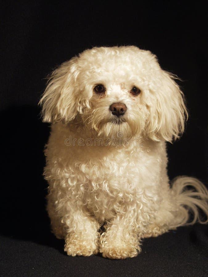 Dog 2 stock image