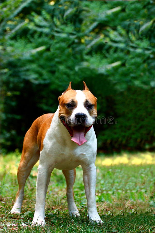 Download A Dog Royalty Free Stock Image - Image: 20785896