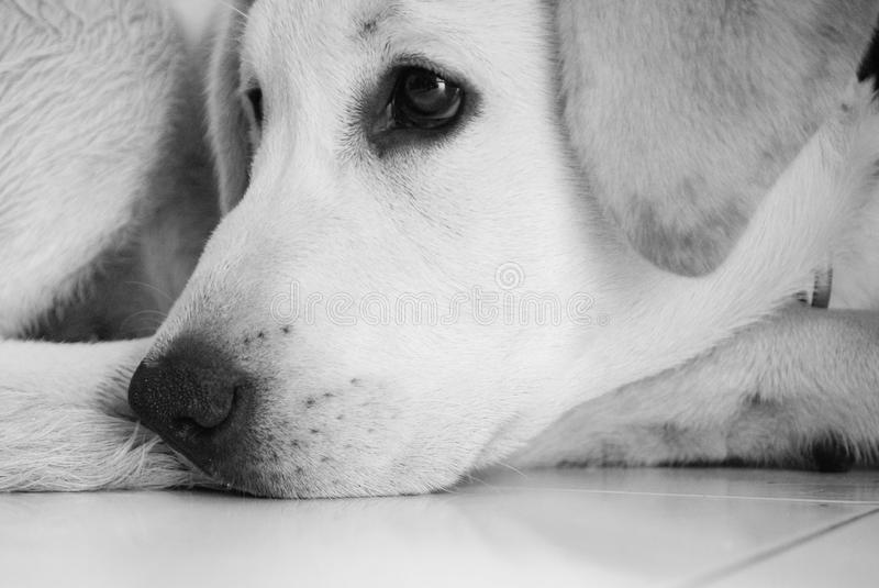 Dog. Close up of a dog face royalty free stock photography