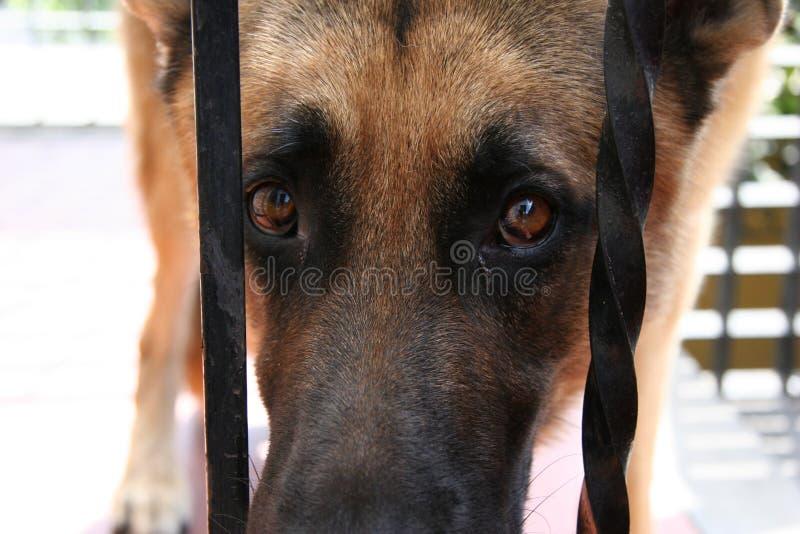 Dog Free Stock Photography