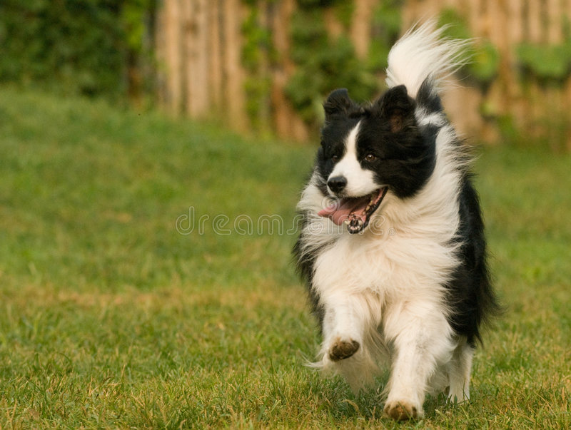 Download Dog stock photo. Image of contemplate, furry, depressed - 4722850