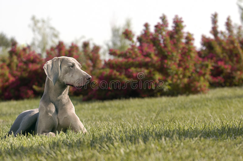 Dog. A dog in grass and look stock photos