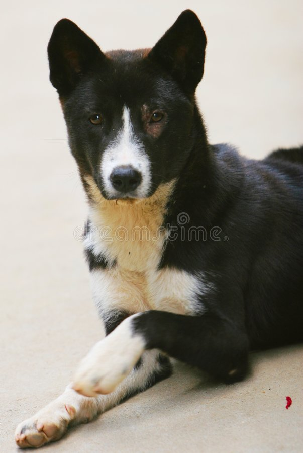 Download Dog Royalty Free Stock Images - Image: 5318659