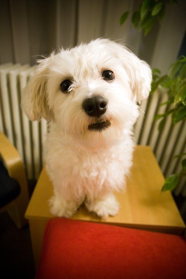 Free Dog Stock Photography - 5545662