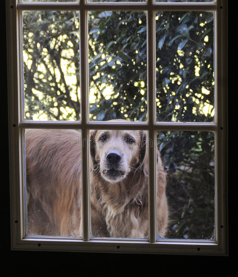 Download Dog stock photo. Image of wait, love, best, patience, outside - 7125492