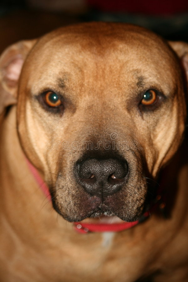 Dog. Close up big best friend royalty free stock photography