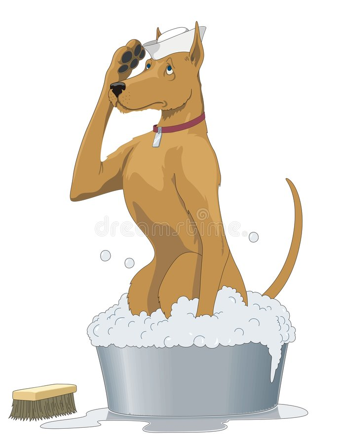 Download Dog stock vector. Image of collar, cartoon, bath, humour - 8410460