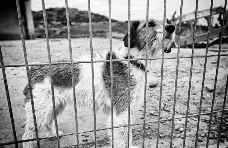 Dog abandoned behind bars. Detail of a homeless pet, loneliness and pity royalty free stock image