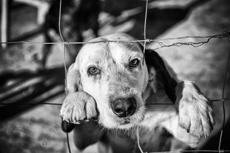 Dog abandoned behind bars. Detail of a homeless pet, loneliness and pity stock images