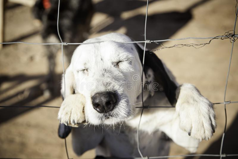 Dog abandoned behind bars. Detail of a homeless pet, loneliness and pity royalty free stock photography