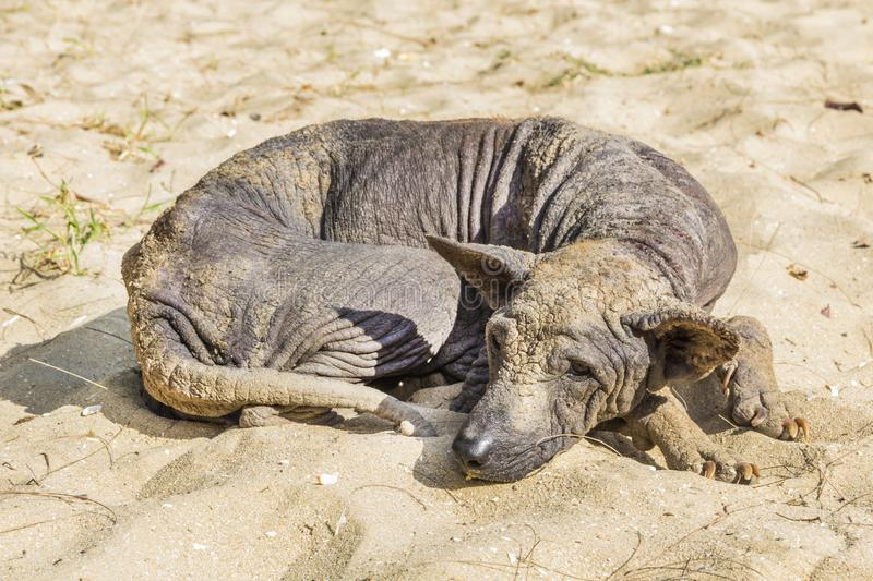 Dog abandoned stray sick. And hungry royalty free stock photography