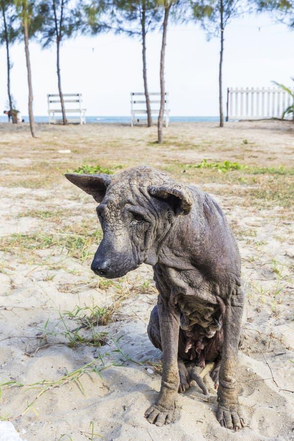 Dog abandoned stray sick. And hungry stock image