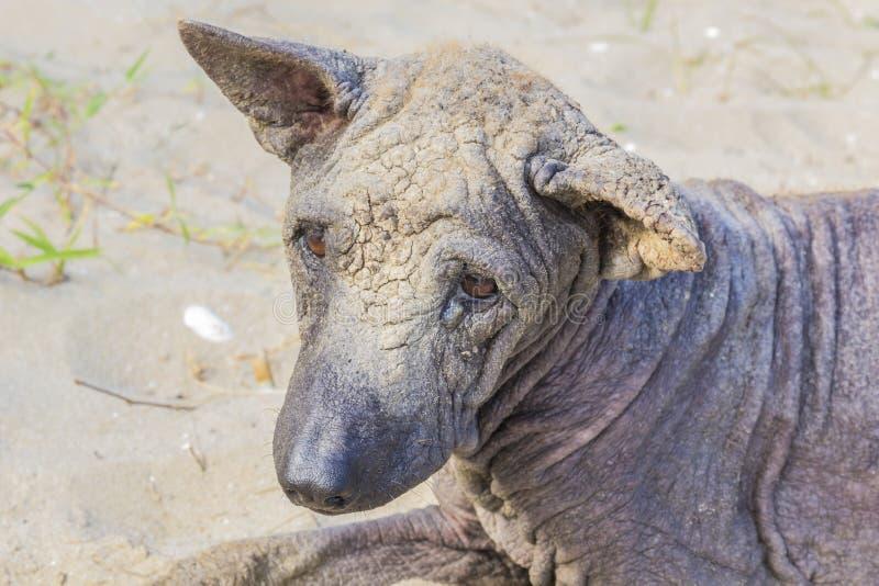 Dog abandoned stray sick. And hungry royalty free stock photos