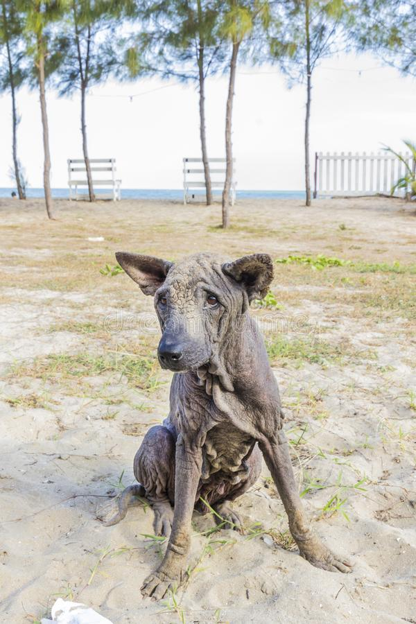 Dog abandoned stray sick. And hungry stock photos