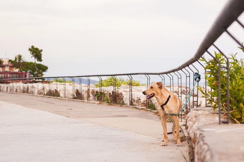Dog abandoned. A dog unwanted abandoned in a park stock photography