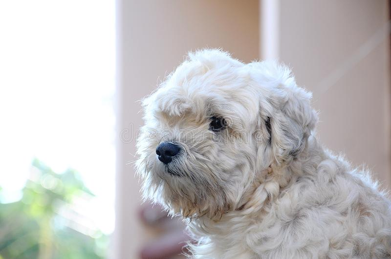 Dog. The abstracted dog is feeling alone royalty free stock photos