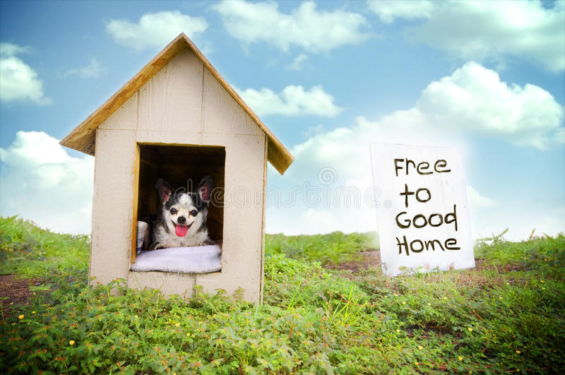 Dog adoption. A small black and white chihuahua dog in a small wooden dog house with a sign stating the dog is free to a good home