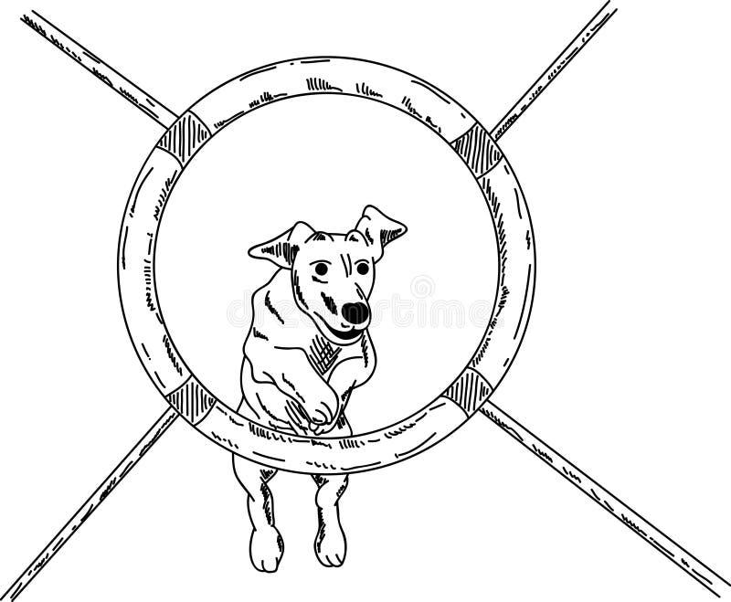 Agility Dog Stock Illustrations