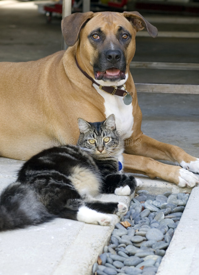 Free Dog And Cat Royalty Free Stock Photography - 1546147