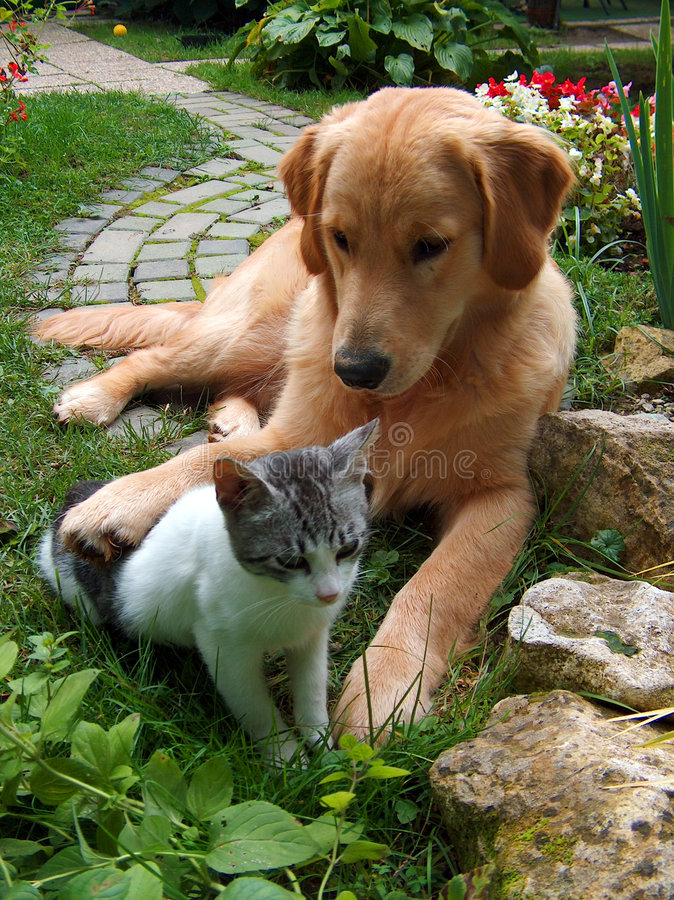 Free Dog And Cat Royalty Free Stock Photo - 4487675