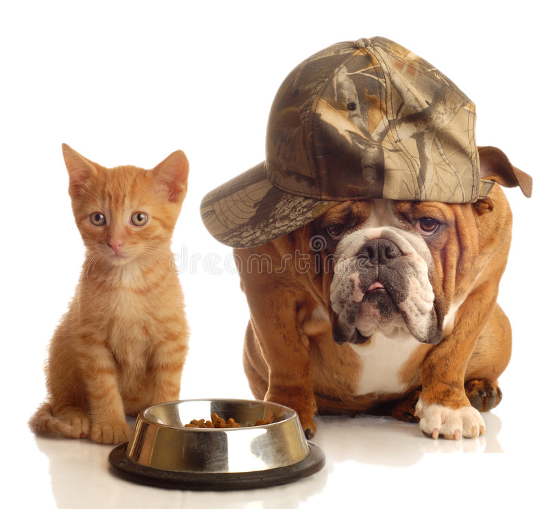 Free Dog And Cat At Food Dish Stock Photography - 6739812