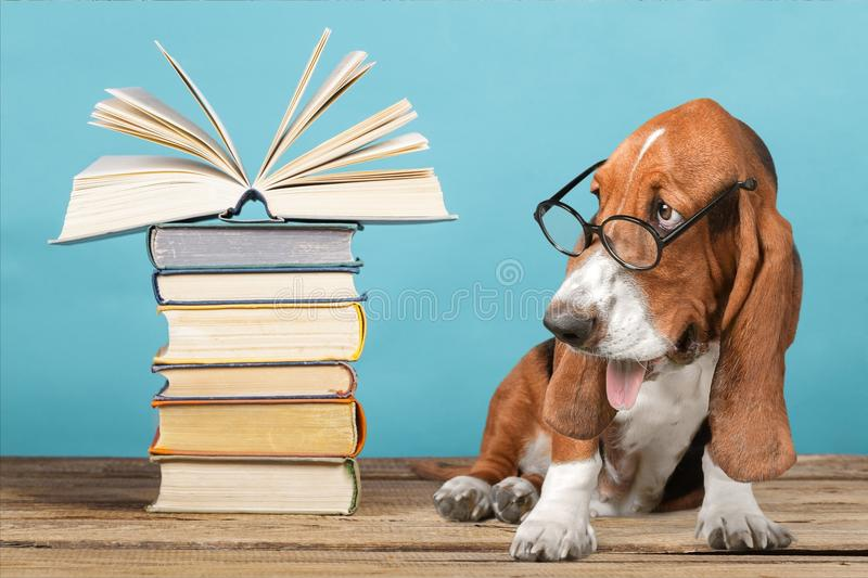 Dog stock image