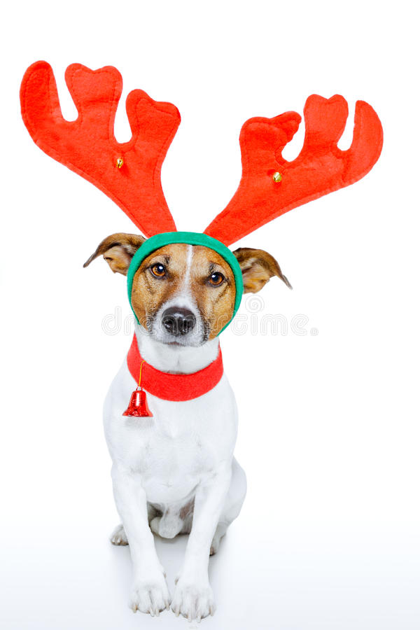 Free Dog As Deer Stock Image - 23266221