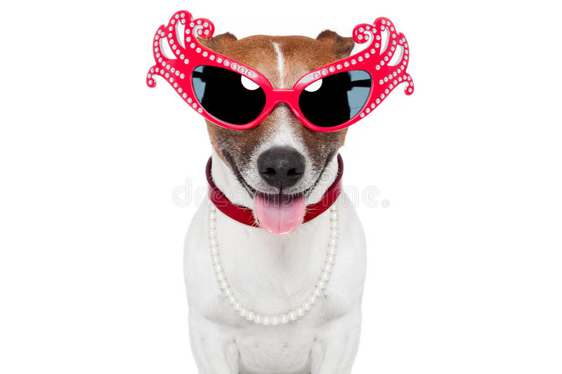 Dog as drag queen. With funny glasses stock photo